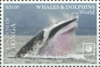 [Marine Life - Whales and Dolpins of the World - White Frame, type CBG]