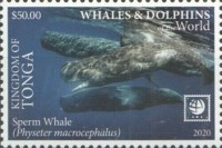 [Marine Life - Whales and Dolpins of the World - White Frame, type CBH]