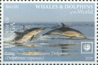 [Marine Life - Whales and Dolpins of the World - White Frame, type CBI]