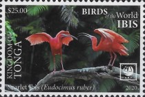 [Birds of the World - Ibis, type CBP]