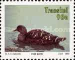 [Waterbirds, type KF]