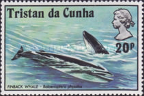 [Whales and Dolphins, Typ FI]
