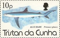 [Sharks, type TE]