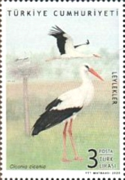 [Birds - Storks, type FNG]