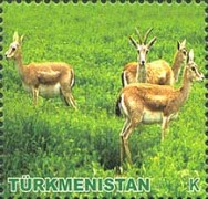 [Animals of Turkmenistan, Typ HR]
