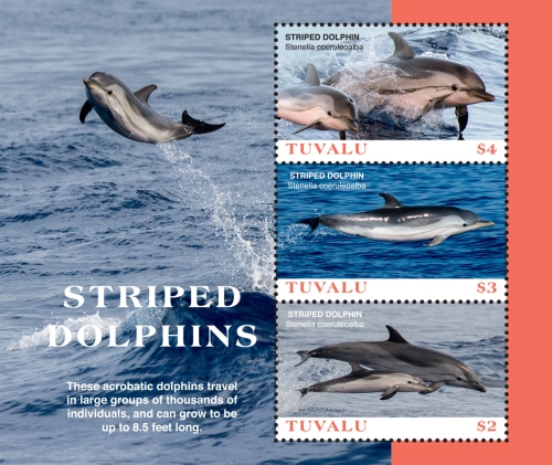 [Marine Life - Striped Dolphins, type ]