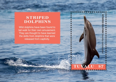 [Marine Life - Striped Dolphins, Typ ]