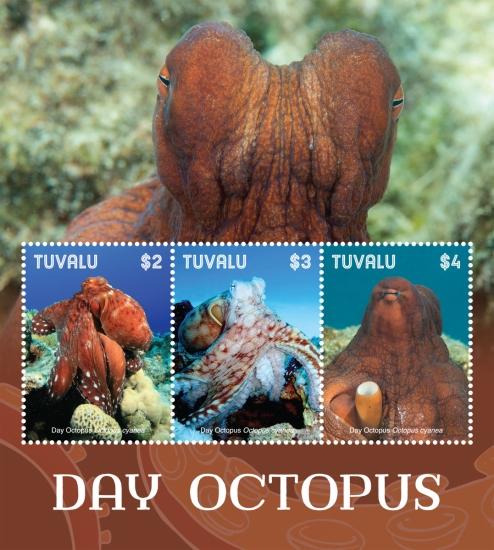 [Marine Life - Day Octopus, Typ ]