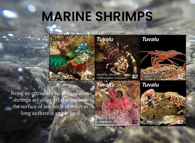 [Marine Life - Marine Shrimps, type ]