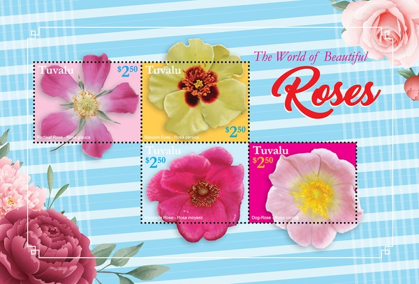 [Flowers - The World of Beautiful Roses, type ]