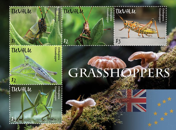[Insects - Grasshoppers, type ]