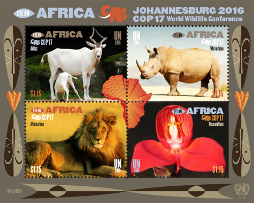 [COP17 - Eye on Africa, type ]