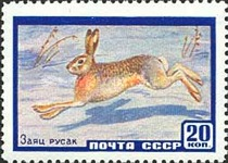 [Fauna of USSR, type BWD]