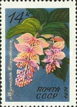 [Tropical Flowers, Typ EHC]