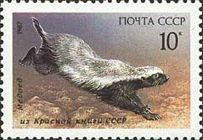 [Mammals Listed in USSR Red Book, type GWN]