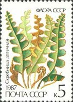 [Ferns, type GXF]