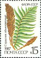 [Ferns, type GXH]