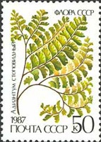 [Ferns, type GXI]