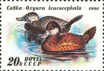 [Ducks, Typ HPT]