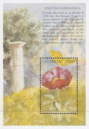 [Flowers of the Mediterranean, Typ ]