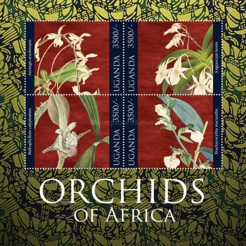 [Flowers - Orchids of Africa, Typ ]