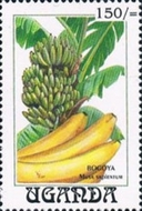 [Fruits and Crops, Typ AOM]