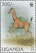 [Endangered Species - Rothschild's Giraffe, Typ BHD]
