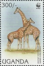 [Endangered Species - Rothschild's Giraffe, Typ BHE]