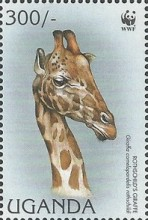 [Endangered Species - Rothschild's Giraffe, Typ BHF]