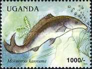 [Fish of Lake Victoria, Typ CNK]
