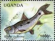 [Fish of Lake Victoria, Typ CNL]
