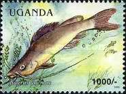 [Fish of Lake Victoria, Typ CNM]