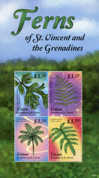 [Ferns of St. Vincent and the Grenadines, type ]