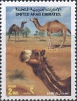 [Dromedary Camels, type OF]