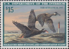 [Department of the Interior Duck Stamps - Surf Scoters, Typ BF]