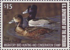 [Department of the Interior Duck Stamps - Ring-necked Duck, type BQ]