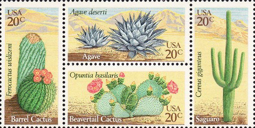 [Desert Plants - Cactus and Agave, Typ ]