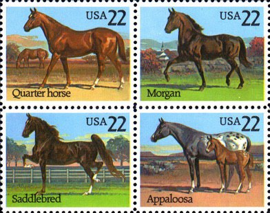 [American Horse Breeds, Typ ]
