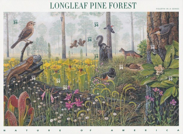[Nature of America - Beauty of Longleaf Pine Forest, Typ ]