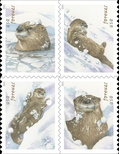 [Otters in Snow, type ]