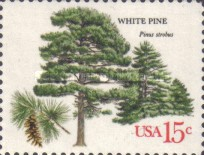 [American Trees, Typ ASS]