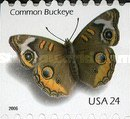 [Common Buckeye Butterfly - Self-Adhesive Coil Stamp, Typ EUL2]