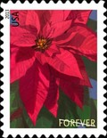 [Flowers - Poinsettia, Typ GJT]
