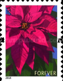 [Flowers - Poinsettia. Year