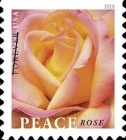 [Definitive - Peace Rose, Typ IAF]