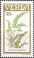 [Ferns, type DN]
