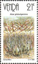 [Aloes, type HA]