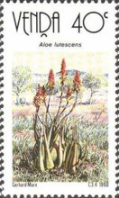 [Aloes, type HC]