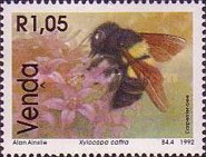 [Bees, type IF]
