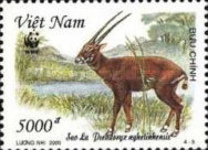 [Endangered Species - Saola, Typ CCD]